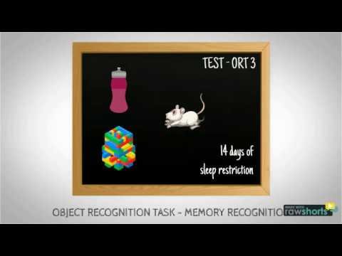 Object Recognition Task