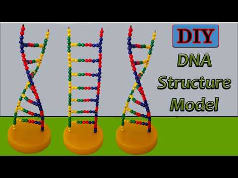 How to Make DNA Structure Model Watson and Crick Deoxyribonucleic Acid Models