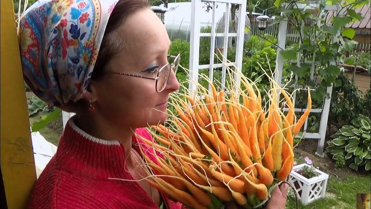 6 соток в конце июня. Проредим морковь, удобрим огурцы, навестим помидоры и домой печь пирог!