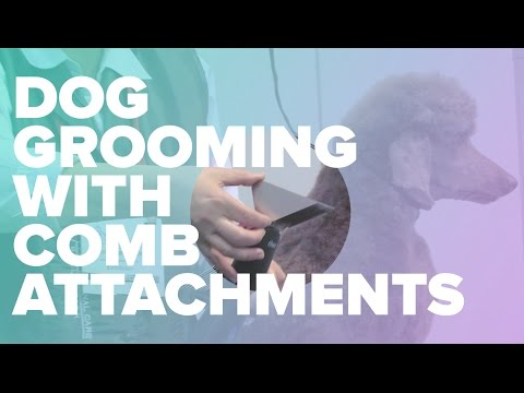 Dog Grooming with Comb Attachments on Your Clippers by Chris Pawlosky