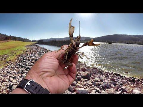 Fishing With Live Crawfish! Everything You Need To Know