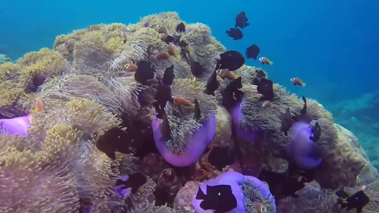 Maldives croisiere Nord et Centre novembre 2016