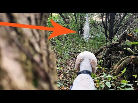 Trespassers on my Land? - WAIT UNTIL YOU SEE what our DOG finds.
