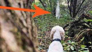 Trespassers on my Land?  WAIT UNTIL YOU SEE what our DOG finds.