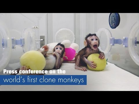 Live: Press conference on world's first clone monkeys世界首个体细胞克隆猴新闻发布会