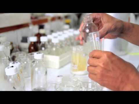 PROFIL FAKULTAS FARMASI UNIVERSITAS AIRLANGGA UNAIR (Faculty of Pharmacy Airlangga University)