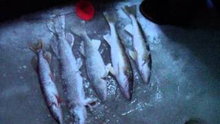 H3 Hooligan Hawg Hunters - Lake Winnipeg Ice Fishing Walleyes January 2013