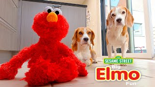 Funny Dogs Vs Laughing and Giggling ELMO
