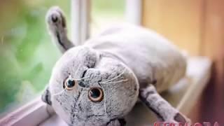 Гороскоп:Какой ты Басик кот