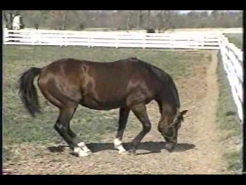 Northern Dancer Entire Kentucky Derby 1964 footage & Goodbye