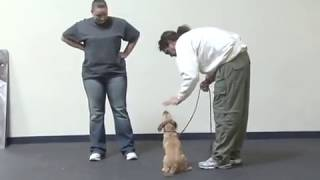 Michael Ellis On Training Small Dogs To Heel
