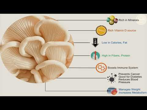 6 Amazing Benefits of Oyster Mushroom