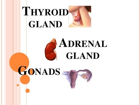 how to make the adrenal gland work better
