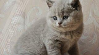 Игрушка котенка.Веселый котенок