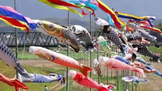 飯塚市目尾(しゃかのお)の鯉のぼり2016