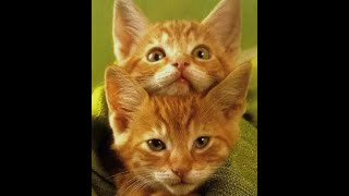 Funny and Cute Cat Videos to Make You Smile! 2021   International Cat