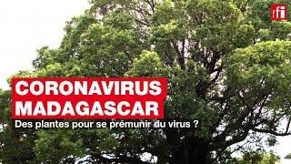 Des plantes pour se prémunir du virus ?