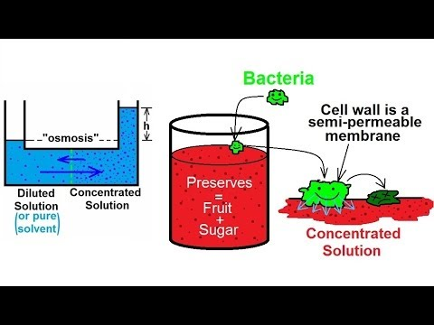 Chemistry - Solutions (50 of 53) Colligative Properties- Osmosis and Food Preservation