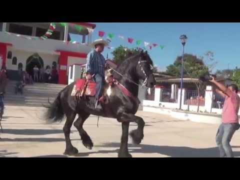 caballo bailador en la plaza de santa barbara gro
