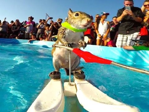 Twiggy The Waterskiing Squirrel