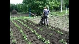 Прополка и окучивание картофеля 2012 год.