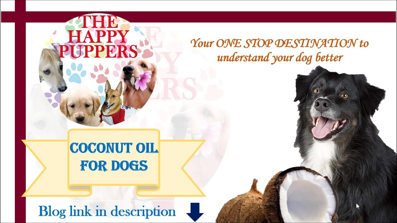 Download Coconut oil, a boon for dogs   Dog care tips and tricks   The Happy Puppers blog   Shruti an Delta
