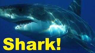Shark Attacks and How to Survive a Shark attack. Shark Facts. TheCoolFactShow Ep. 2