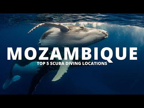 SCUBA Diving Mozambique: Top 5 dive sites in Mozambique