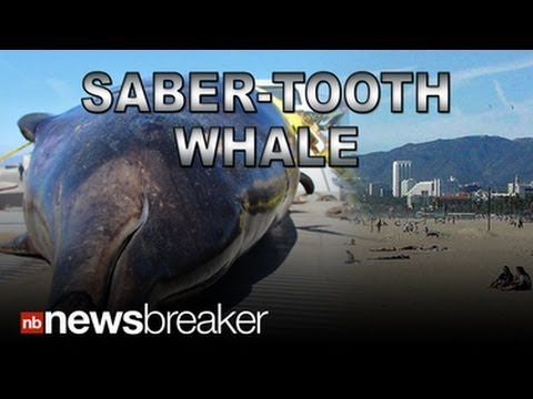 Rare 7-foot sea creature that washed ashore in Southern California identified