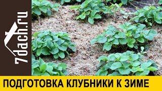 🍓 Подготовка клубники (садовой земляники) к зиме - 7 дач