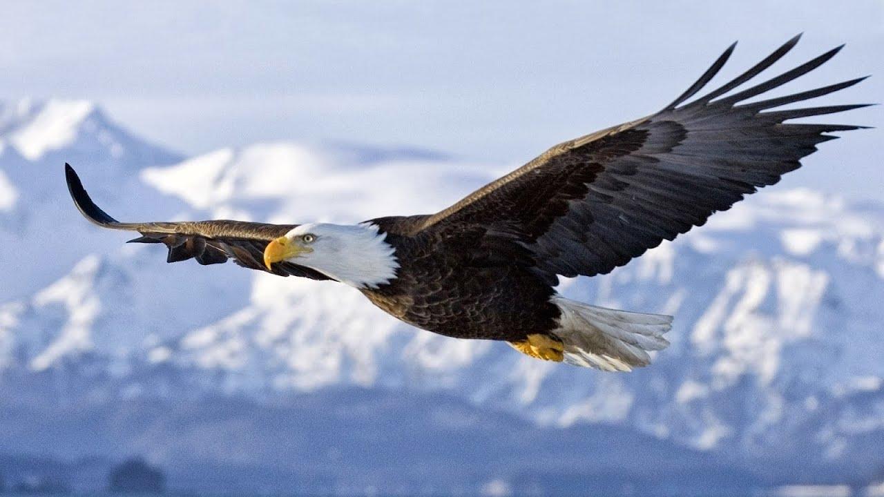 Resultado de imagen para Una águila volando en las alturas