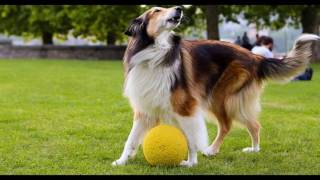 How To Potty Train a Dog - Popular Online Dog Training Videos and Advanced Dog Obedience Classes