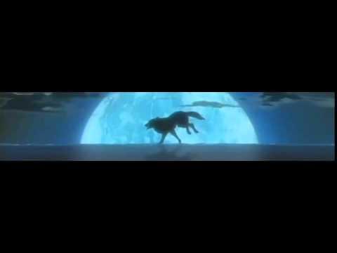 maaya sakamoto - gravity (sub español + lyrics)