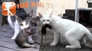 Video Sound of Cats to scare the Rats download MP3, 3GP, MP4, WEBM, AVI, FLV Desember 2017