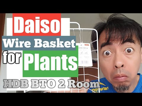 HDB BTO 2 Room Daiso Japan Wire Basket For Your Plants Singapore Youtuber