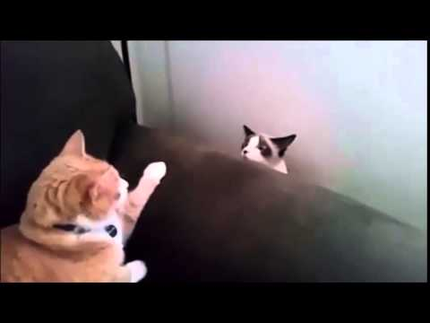 Funny Video - Funny Pets Compilation - Funny Cat - Funny Dogs