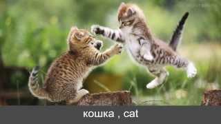"KorDic 10 ""домашние животные"" , ""domestic animal'(1)"