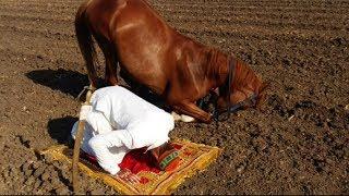 حصان يصلي مع صاحبه , مشاهد تجعلك مندهش سبحان الله !!