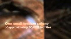 La Jolla, CA Termite Control - Facts About Termites