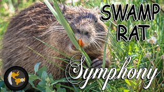 Swamp Rat Symphony | Cinematic 4k | Planetlenz