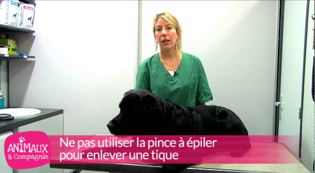 comment enlever une tique sur un chien youtube. Black Bedroom Furniture Sets. Home Design Ideas