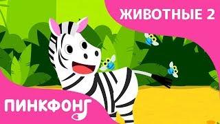 ЗЕБРА | Песни про Животных | Пинкфонг Песни для Детей