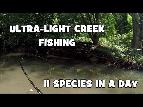 A GREAT FIND!!! 11 Species in ONE DAY at a NEW CREEK! (Give-Away Included) (Media, PA)