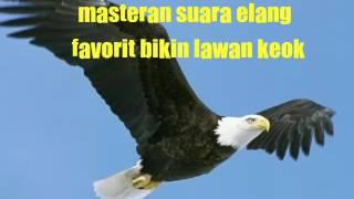 Download Video Masteran suara elang bikin keok lawan MP3 3GP MP4