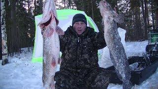 Эти монстры не лезут в лунку Зимняя рыбалка с ночёвкой