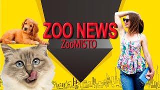 Собака повторяет слова и смешные фото | Новости из мира животных #29 | ZooMisto