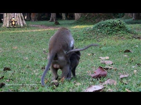 OMG ! Monkeys meeting girl - Funny monkeys group meeting - monkeys video