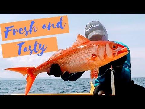 Jigging, Fresh And Tasty 8kg Ruby Snapper