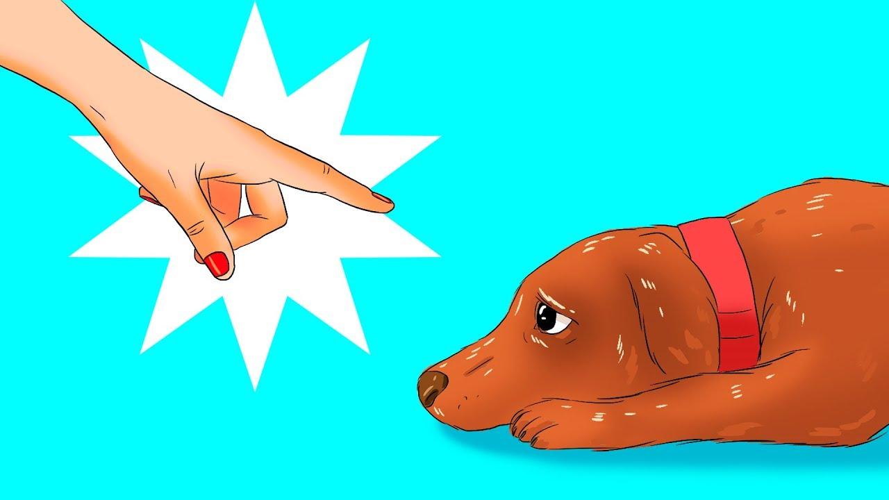 12 Coisas Perigosas Que Você Faz Com o Seu Cachorro Sem Nem Se Dar Conta
