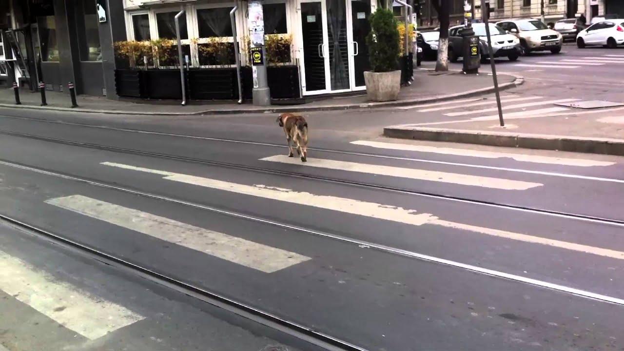 dog photo road - photo #49